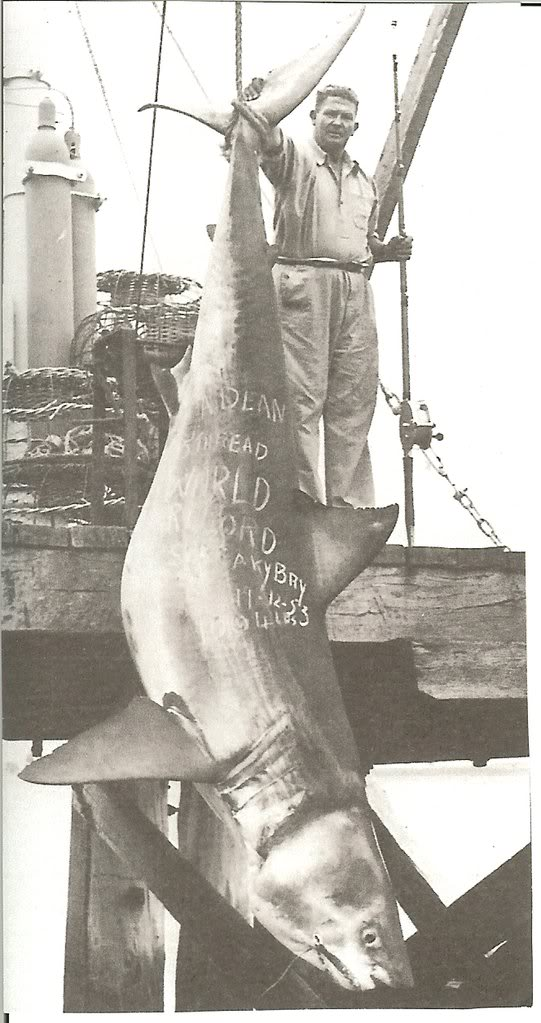 largest shark ever caught - photo #21
