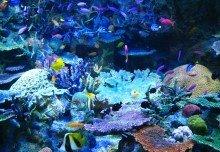 Strangest Deep Sea Creatures